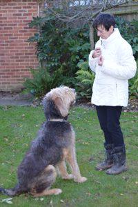 Adult-dog-training
